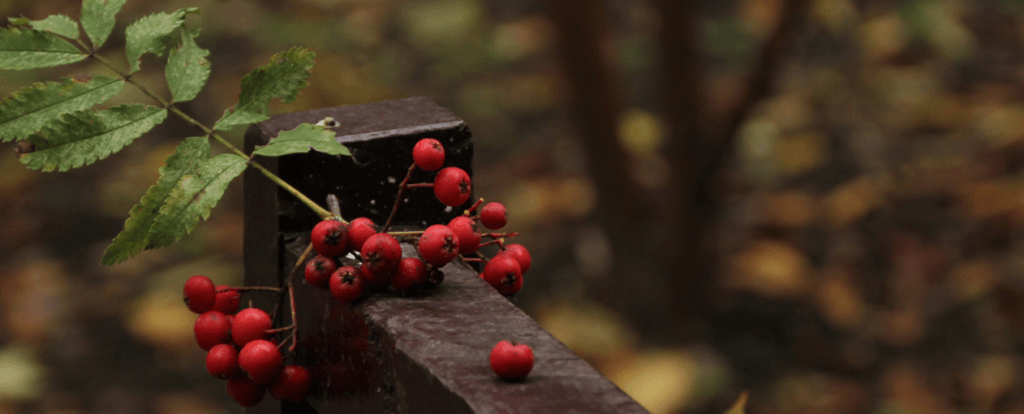 Приемы лирической песни в стихотворении С. А. Есенина