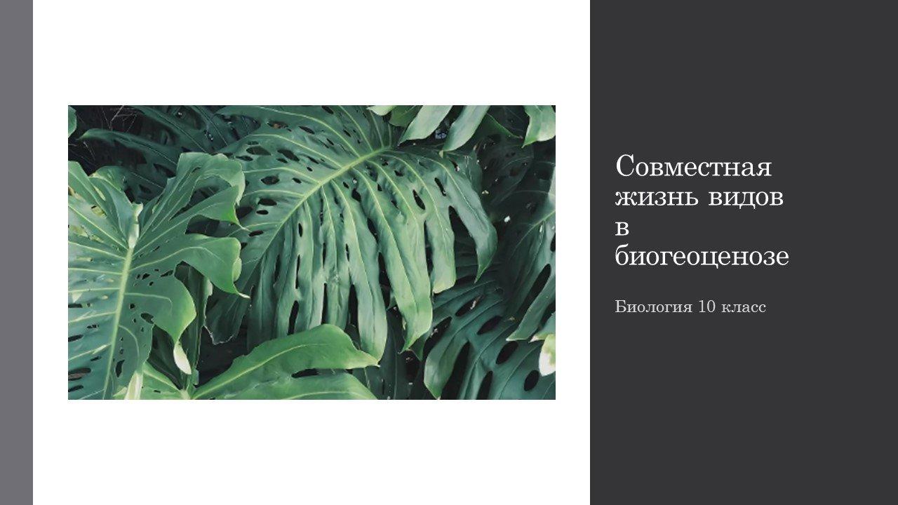 Совместная жизнь видов в биогеоценозе. Презентация.